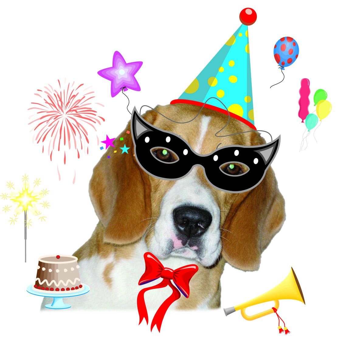 Eccezionale Beagle's Birthday: buon compleanno NINA! | YouBeagle.com ZV11